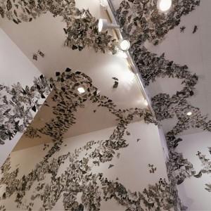 Moth Migration